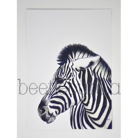 Postkarte Zebra